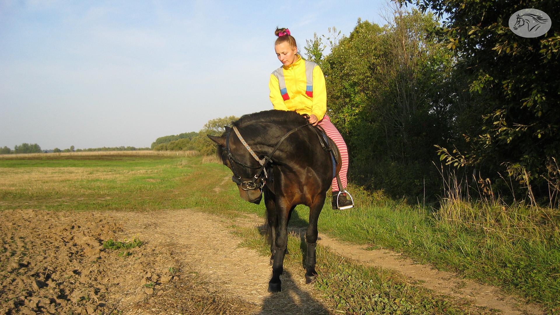Paslauga - Žirgų nuoma