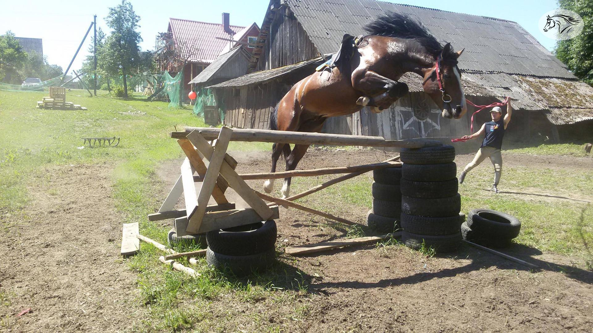 Paslauga - Žirgų treniravimas, priežiūra, gardų nuoma