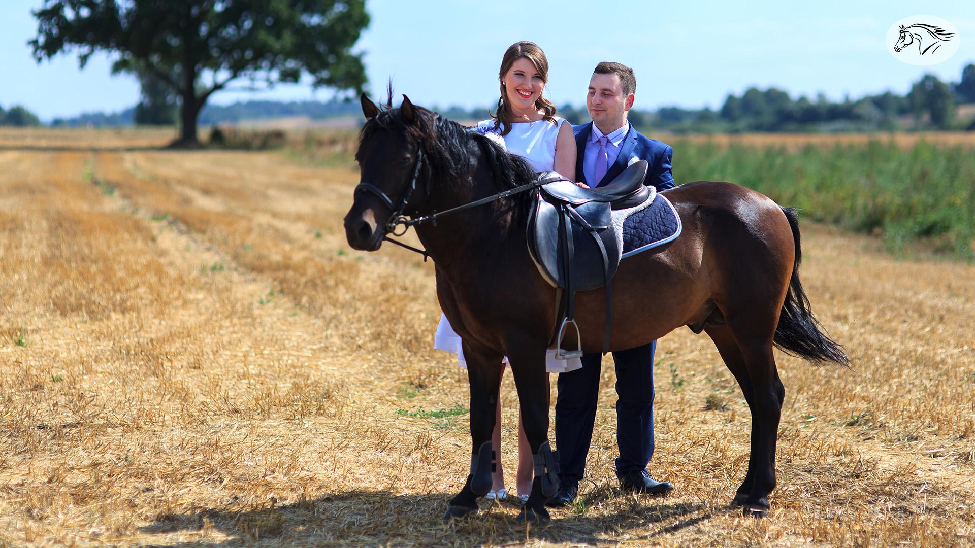 Paslauga - Fotosesijos su žirgais